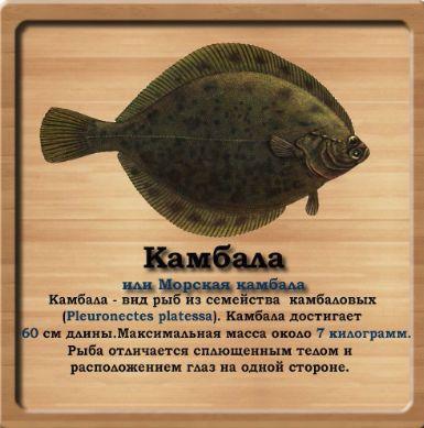 форум рыбаков камбала