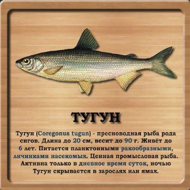 рыболовный сайт тугун